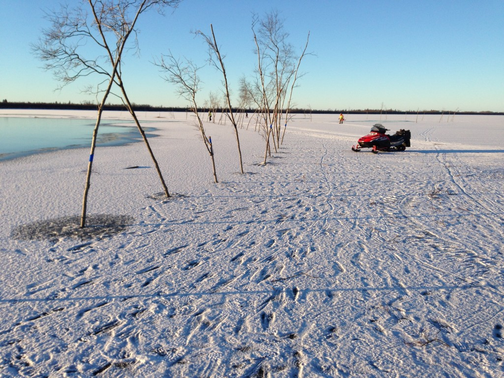 trees with blue reflectors are used to mark open water & thin ice areas